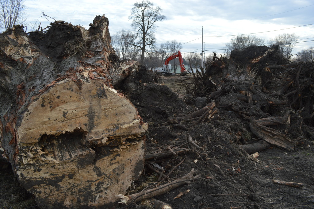 Trees uprooted by city of Cedar Rapids nearly seven years after epic flood