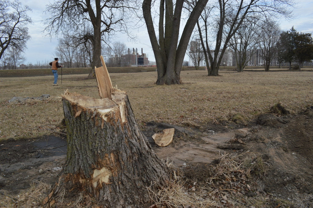 A resident of the Time Check neighborhood walks in an area where trees are being removed to make way for green space near the Cedar River. (photo/Cindy Hadish)