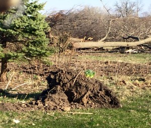Trees are being torn out to make way for new development in southeast Iowa City. (photo/Lara Cornick)