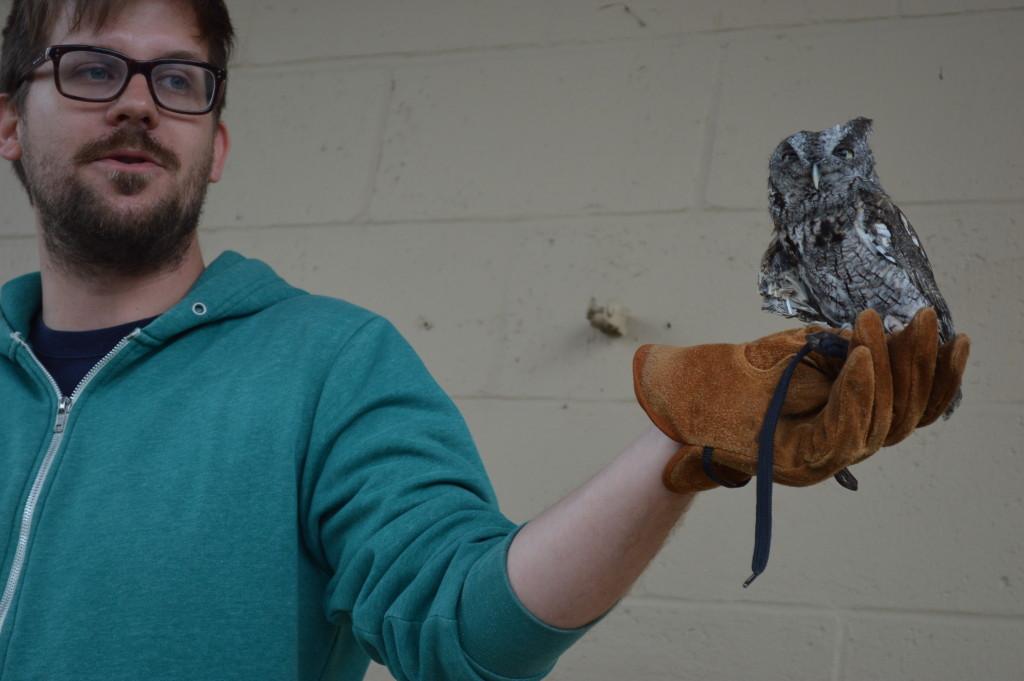 eco screech owl