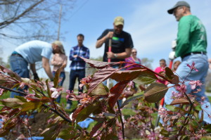 "Trees Forever led a tree-planting during last year's EcoFest. The group has events planned every day in the coming week as part of an ""Earth Week Blitz."""