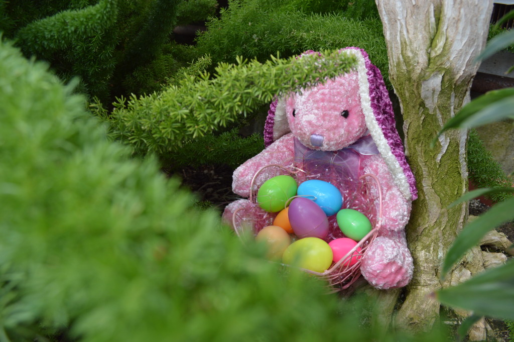 The Easter bunny could be found hiding throughout the Noelridge Greenhouse on Sunday, April 5, 2015, during the Easter Showcase in Cedar Rapids, Iowa. (photo/Cindy Hadish)