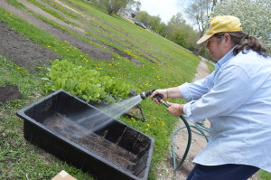 Volunteer Julie Wiedner helps at the garden site of Feed Iowa First near St. Wenceslaus Church on Wednesday, April 29, 2015. (photo/Cindy Hadish)