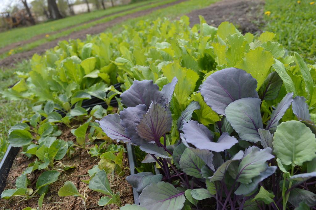 feed iowa seedlings