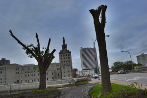 Twenty trees were removed from one block of First Street SW, in Cedar Rapids. (photo/Cindy Hadish)