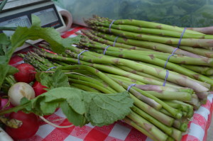 Radishes and asparagus were among the CSA's vegetables in its early weeks. (photo/Cindy Hadish)