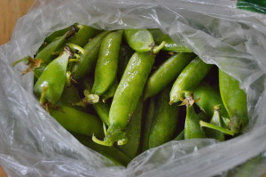 Peas from Farmer Dave's CSA are shown shortly before they were devoured. (photo/Cindy Hadish)