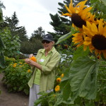 Linn County Master Gardener, Peggy Green, demonstrates seed-saving techniques in the new sunflower garden at the 2015 Brucemore Garden and Art Show. (photo/Cindy Hadish)