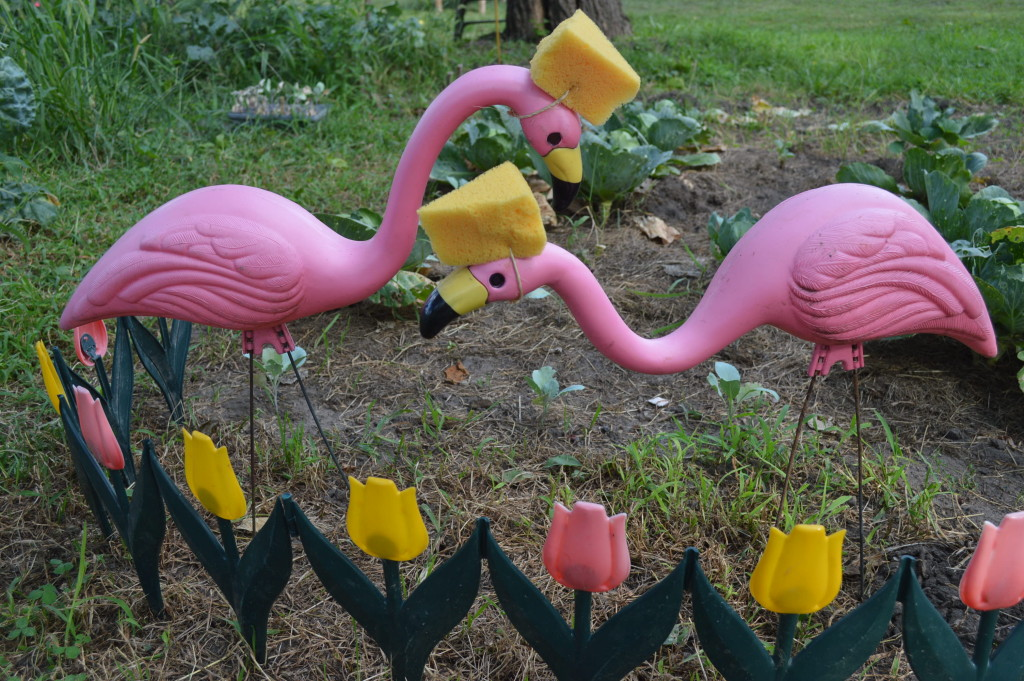 "Plastic flamingos pay homage to the Green Bay Packers in the ""corner of kitsch"" in Ed Thornton's garden. (photo/Cindy Hadish)"