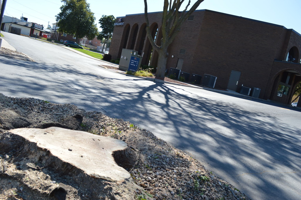 A stump remains where a large honey locust tree was removed, outside of the Bank of the West headquarter in Marion, Iowa. (photo/Cindy Hadish)