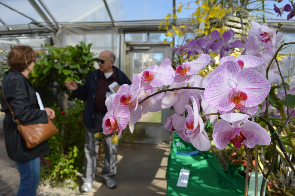 Bill Snyder, of the Eastern Iowa Orchid Society, talks to visitors at the Noelridge Greenhouse during the orchid show. (photo/Cindy Hadish)