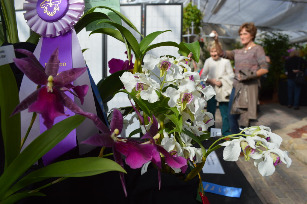 Visitors, who are encouraged to cast their vote for the People's Choice Award, point out their favorites at the Eastern Iowa Orchid Show and Sale. (photo/Cindy Hadish)