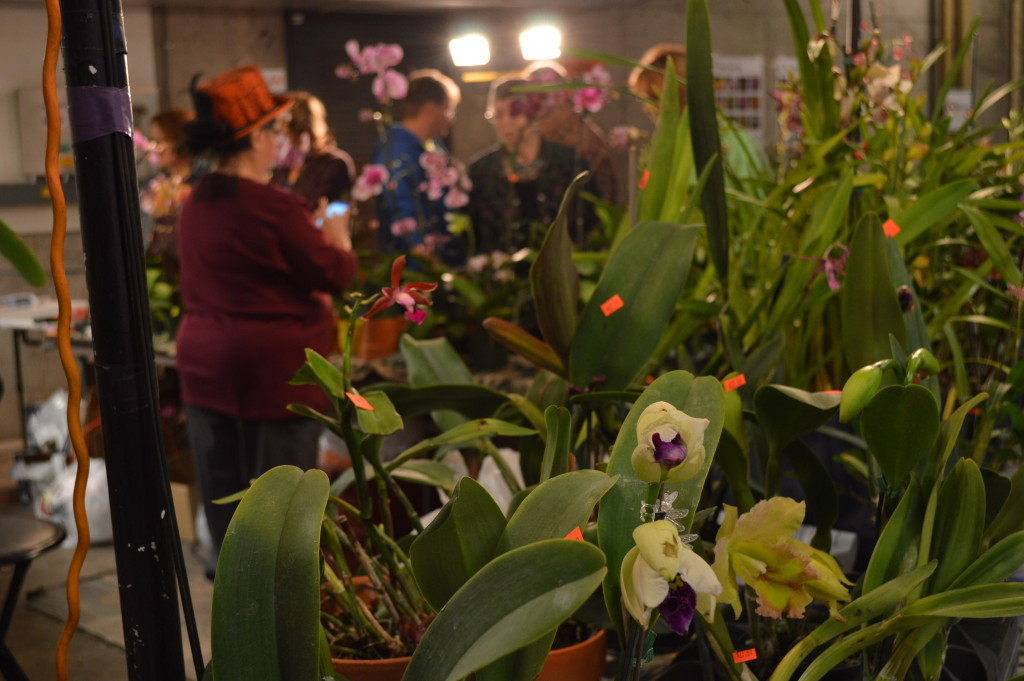 Anything Orchids of Frankfort, Ill., was among the vendors selling orchids at the show and sale. Prices at the event ranged from $8 for bareroot plants to $150 for newer, unusual varieties in bloom. (photo/Cindy Hadish)
