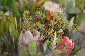 Proteas are grown at the Resendiz Brothers farm in California and sold at Bark & Bloom. (photo/Cindy Hadish)