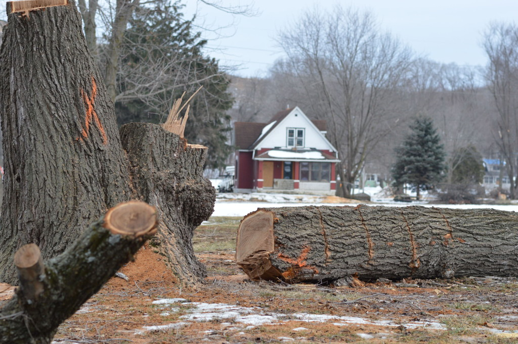 A large tree is removed across from one of the last homes still standing next to the Czech Village neighborhood in Cedar Rapids, Iowa. (photo/Cindy Hadish)