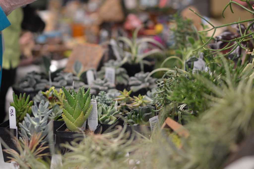 Succulents from In the Country Garden & Gifts of Independence, were among the items sold by vendors at the Winter Gardening Fair in Cedar Rapids. (photo/Cindy Hadish)