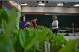 Plant sales sprout in Eastern Iowa