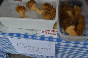 Morel mushrooms were sold during Houby Days 2015 in Czech Village. (photo/Cindy Hadish)