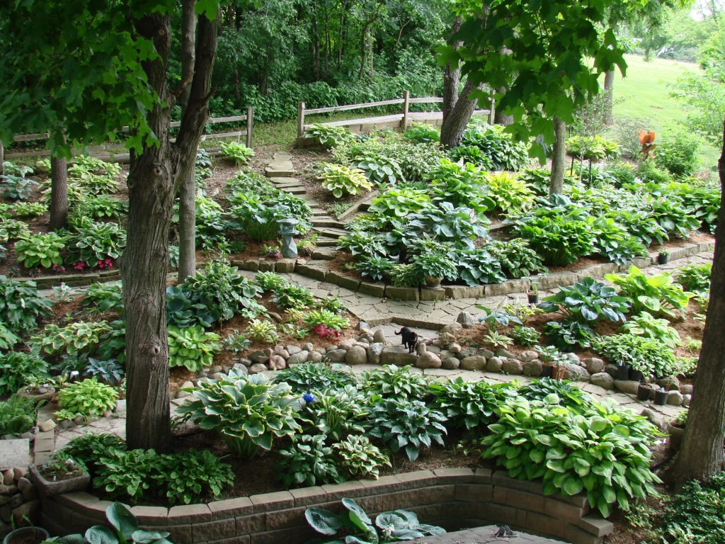 Jay and Nancy McWherter's pet cat, Piper, finds its way through a myriad of stone pathways in this overview of the backyard gardens. More than 1,000 varieties of hosta, along with tropical plants and perennials, grow in the gardens under the shade of maples and other trees. (photo/Jay McWherter)