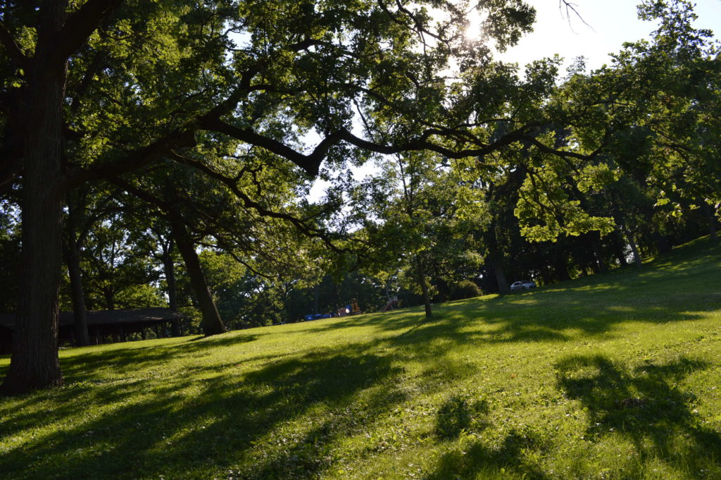 Stately oak trees are among the attractions at Daniels Park in Cedar Rapids, Iowa. (photo/Cindy Hadish)