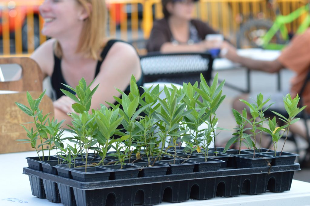 Free milkweed plants were given away to customers at the kick-off farmers market at Lion Bridge Brewing Company, as part of the effort to support monarch butterflies. (photo/Cindy Hadish)