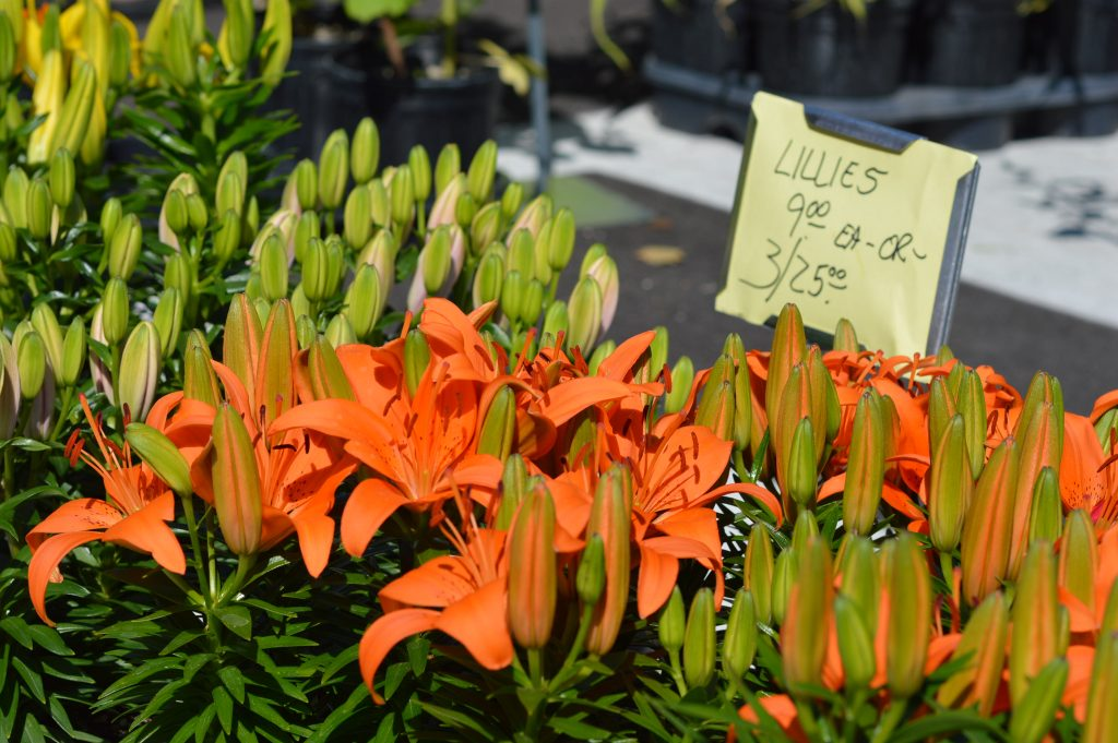 Lillies from Norton's Greenhouse, of Toledo, Iowa, are sold at the Downtown Farmers Market on Saturday, June 4, 2016. (photo/Cindy Hadish)