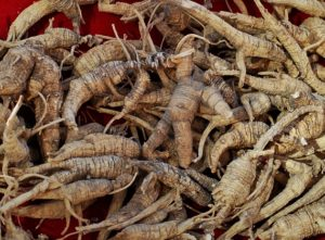 Iowans charged with harvesting valuable ginseng roots on state land