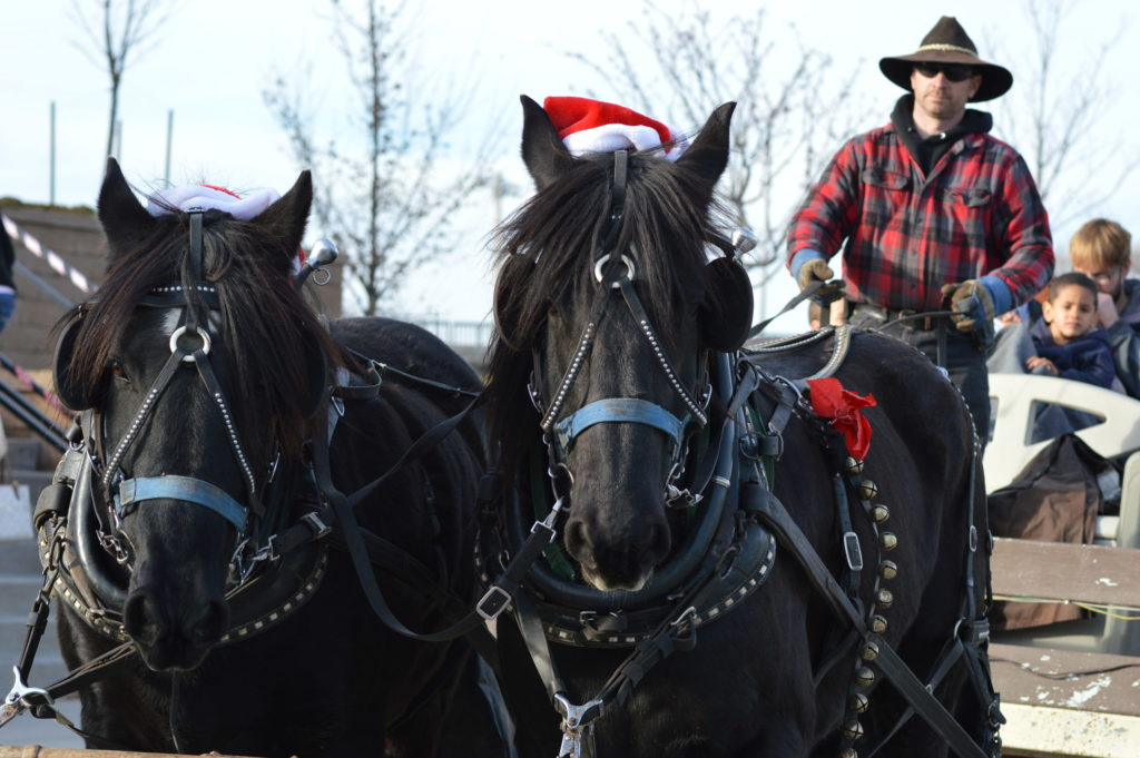 A horse-drawn wagon takes visitors through Czech Village in December 2015. The wagon, a shuttle and trolley rides are all planned for the weekend of Dec. 3 and 4, 2016. (photo/Cindy Hadish)