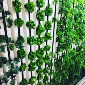 Iowa hydroponic farm grows in unique environment
