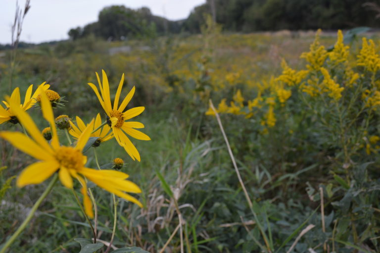 Indian Creek Nature Center announces plan with Frontier Co-op for farming project