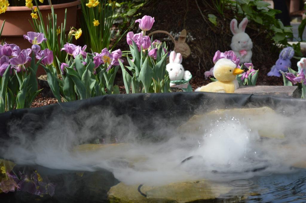 Easter Showcase happening this weekend at Noelridge Greenhouse